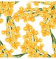 orange iris flower on white background vector image