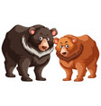 black and brown bears vector image vector image