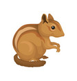 chipmunk wild rodent animal on vector image vector image