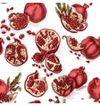 hand drawing pattern pomegranate colorful vector image vector image
