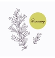 Hand drawn rosemary branch with leves isolated on vector image vector image