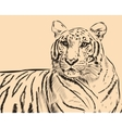 Tiger scetch hand drawn on background vector image vector image