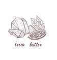 drawing cocoa butter vector image