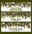 extra vrigin olive oil sketch banners vector image vector image