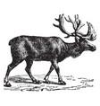 reindeer vintage vector image