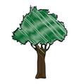drawing natural tree foliage image vector image