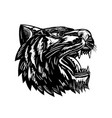 growling tiger woodcut black and white vector image vector image