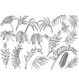 hand drawn tropical palm jungle plants set vector image