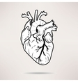 icon body heart on white background vector image vector image