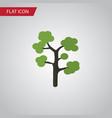 isolated evergreen flat icon garden vector image