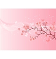 Japanese cherry blossom vector image vector image