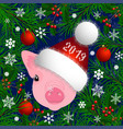 portrait of a pig head in the new years hat the vector image vector image