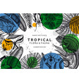 tropical banner design frame with hand drawn vector image vector image
