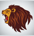 wild angry lion head vector image