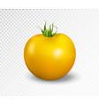yellow tomato realistic vector image