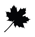 isolated leaf silhouette vector image