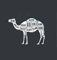 camel dromedary butcher guide scheme vector image vector image