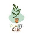 caring for home plants ward over flowers ficus vector image vector image