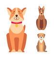 Cute purebred dogs cartoon flat icons set