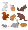 cute rodents set small wild and domestic animals vector image
