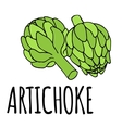 doodle of artichoke vector image