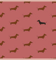 seamless pattern with dachshund dog vector image vector image