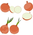 Set of onion vector image