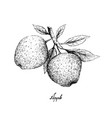 hand drawn of apple fruits on white background vector image vector image