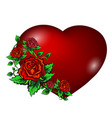 red heart and roses vector image vector image