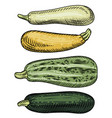 set of four zucchini of different varieties and vector image