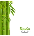 Colorful Stems and Bamboo Leaves vector image vector image