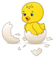 cute little cartoon chick hatched from an egg vector image