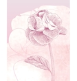 Hand drawn gentle rose on pink background vector image vector image