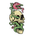 skull and monster plant vector image vector image