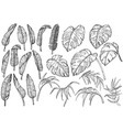 tropical jungle leaves set vector image vector image