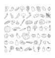 vegetable element doodle line set freehand vector image