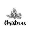 christmas celebrating branch of a christmas tree vector image vector image