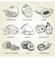 hand drawn set different tropical fruits vector image vector image