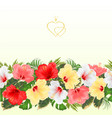 border seamless background various hibiscus vector image vector image