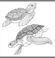 sea turtle coloring book hand drawing coloring vector image vector image