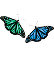 colorful butterflies on white background vector image vector image
