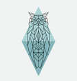 Geometric owl wild animal vector image