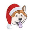 akita inu dog wears christmas hat vector image vector image