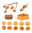 set persimmon fruit half cutted and whole vector image vector image