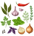 set various stylized herbs and spices vector image