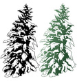 Snowy Conifer vector image vector image