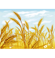 wheat in the field vector image