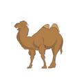 camel color vector image
