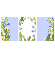 floral cards set with summer wild flowers vector image vector image