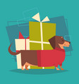 badger dog with gifts stack box wearing winter vector image vector image
